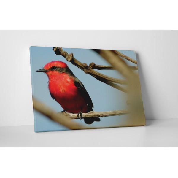 Červený vtáčik