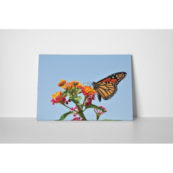 Farebný motýľ na kvete