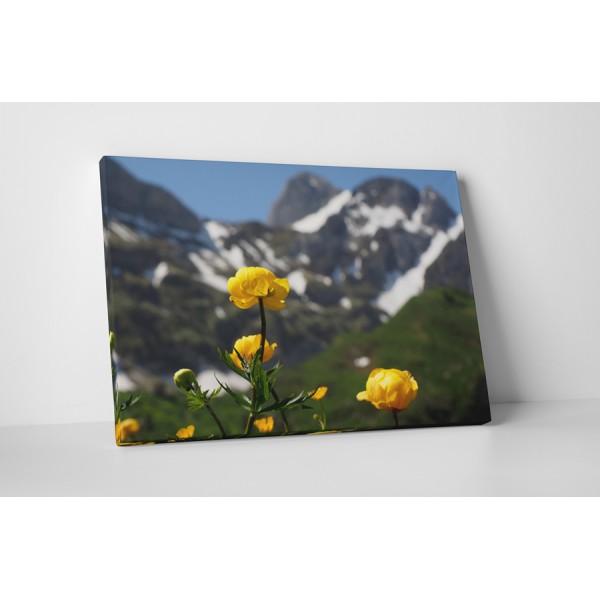 Divé žlté kvety
