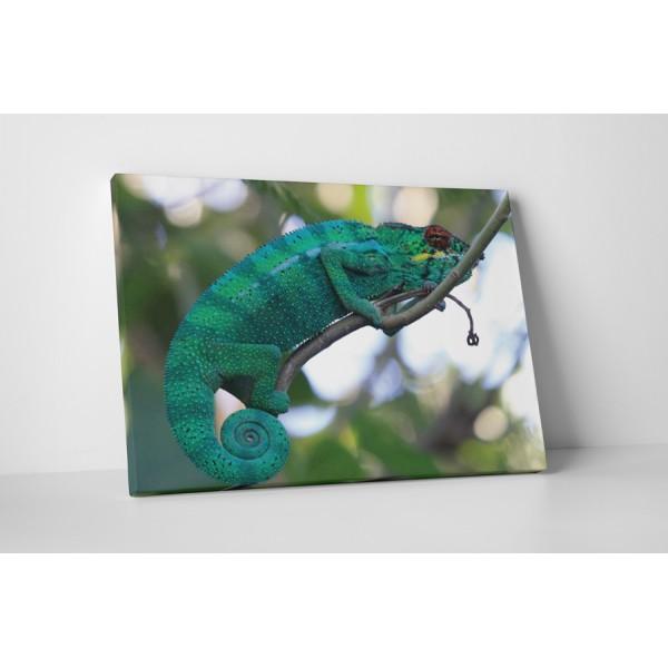 Chameleon na vetve stromu