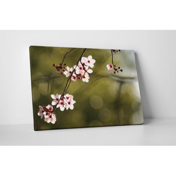 Čerešňový kvet