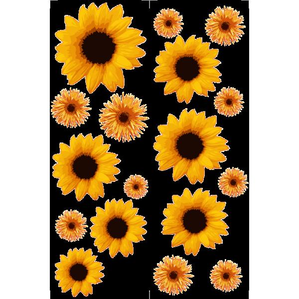 Slnečnica - Farebný nálepkový balík