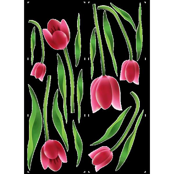 Balíček tulipánov
