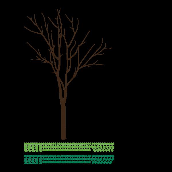 Bohatý strom